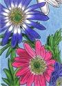 Bold Grecian Windflowers