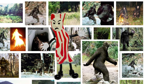 Mr. Bacon Googles Big Foot
