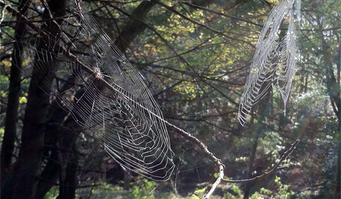 Spider totem: Creativity and Weaver of Fate