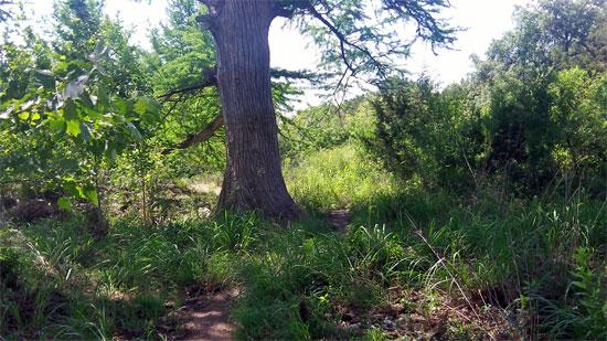 A hidden trail, Garner State Park
