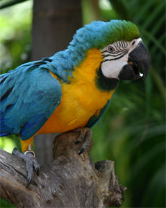 Macaw © Ryan Pike | Dreamstime.com